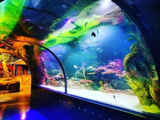 Shreveport Aquarium's Ocean Tank
