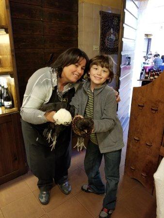 Ulignano, Italia: Chickens