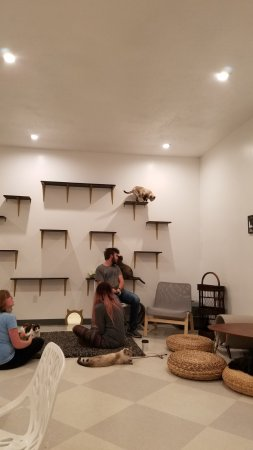 ‪Tinker's Cat Cafe‬