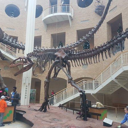 Fernbank Natural History Museum Hours