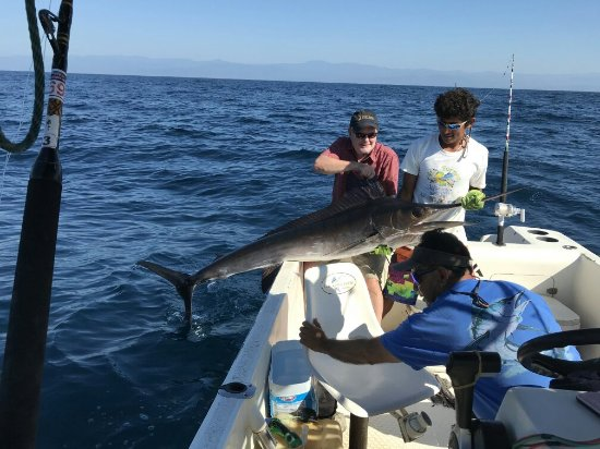Omar's sportfishing: IMG_2357-2_large.jpg