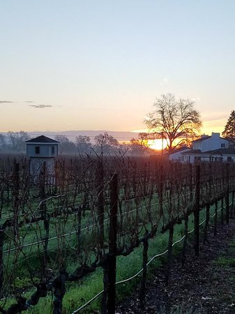 Chateau de Vie: New Years Day 2018 in the vineyard