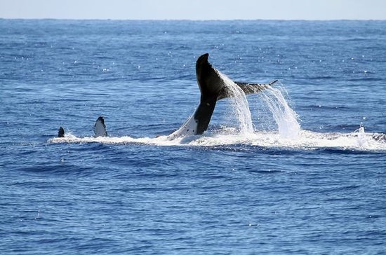 Full Day Whale Watching Tour in...