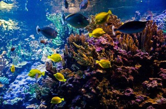 Tour de buceo en Fiji en la laguna de...