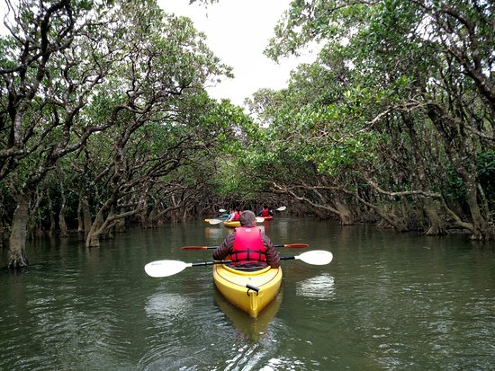 Mangrove Forested Area: IMG_20171228_132102330_large.jpg