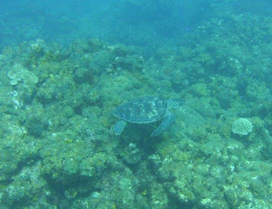 Scuba Steve's Diving Ltd.: Turtle