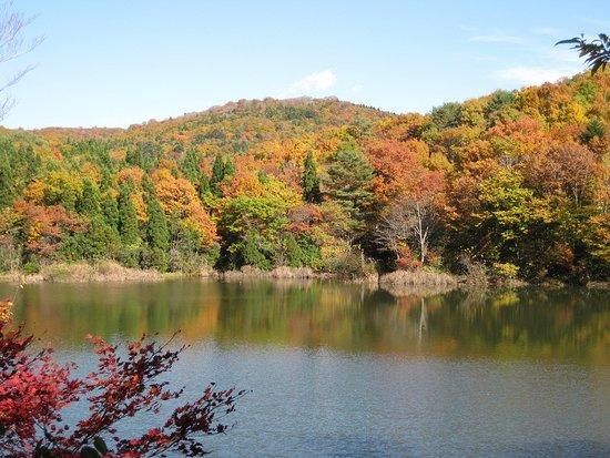 Mominoki Forest Park