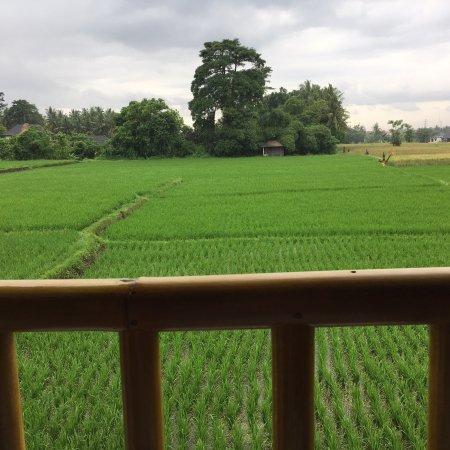Lodtunduh, Indonesia: photo3.jpg