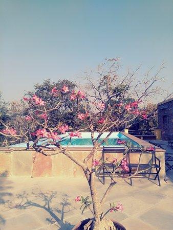 Devra Udaipur : Swimming Pool