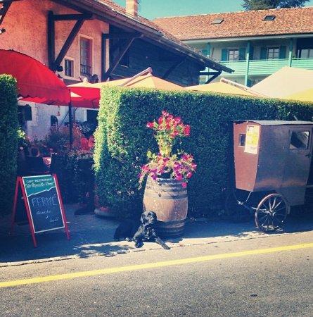 Russin, Suisse : IMG_20180104_102542_large.jpg