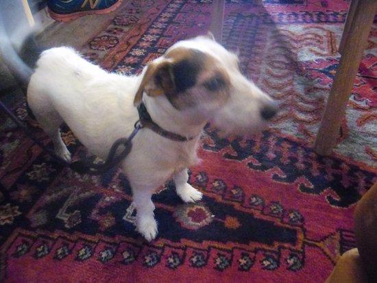 Vale Of Rheidol: dog freindly place