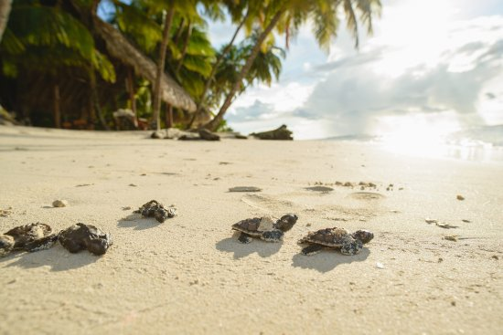 Calala Island Reviews