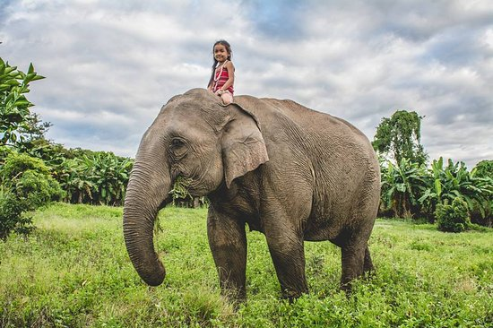 Airavata Khmer Elephant Foundation