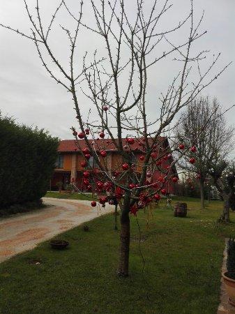 Malcontenta, Italia: IMG_20171230_122011_large.jpg