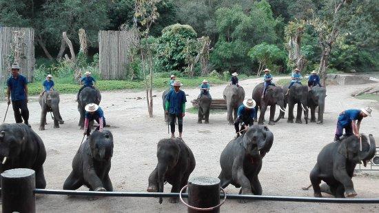 ปางช้างแม่แตง: spettacolo degli elefanti