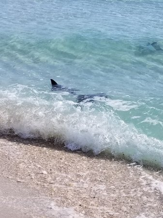 Navarre Beach All You Need To Know Before You Go With