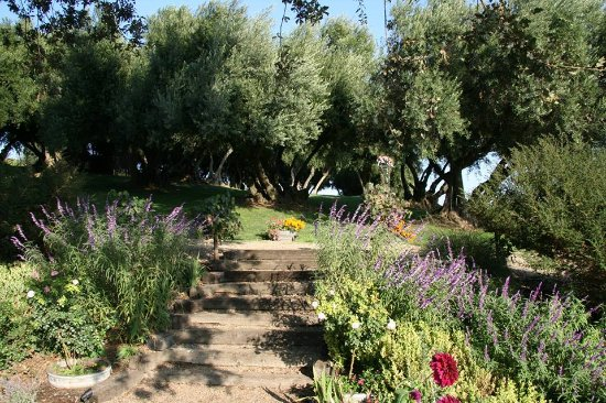 Paso Robles, CA: Garden views