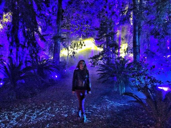 Enchanted Forest Obr Zek Za Zen Descanso Gardens La Canada Flintridge Tripadvisor
