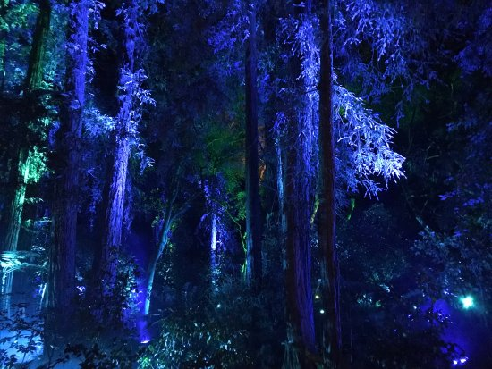Enchanted forest picture of descanso gardens la canada flintridge tripadvisor for Enchanted forest descanso gardens