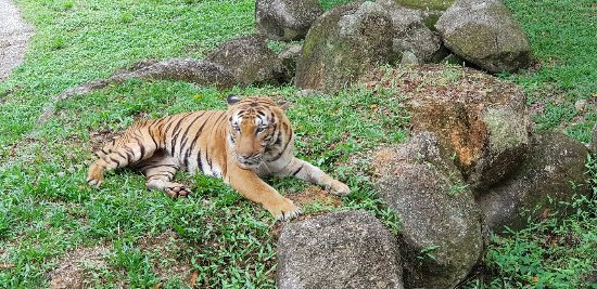 A' Famosa Safari Wonderland: 20180104_140413_large.jpg