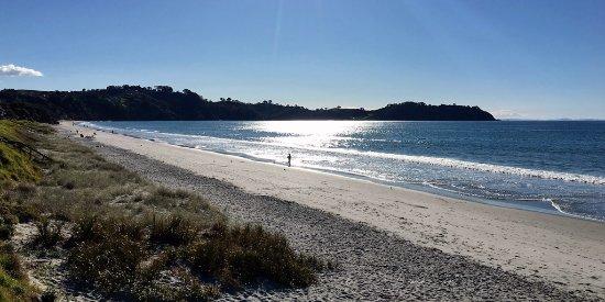 Waiheke Island Bush & Beach Walk with Walking By Nature