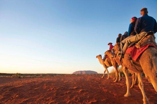 Yulara, Australia: Uluru Camels
