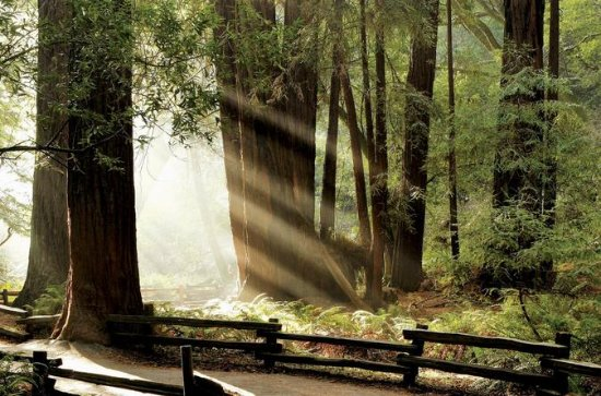 Private Muir Woods and Napa Wine Tour