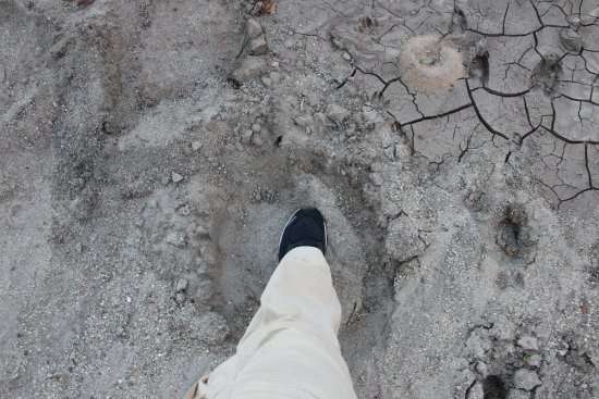 Osupuko Lodge: My feet compared with an elephant's