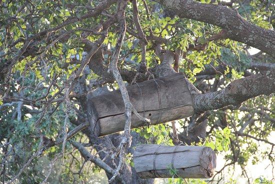 Osupuko Lodge: Masai bee hive