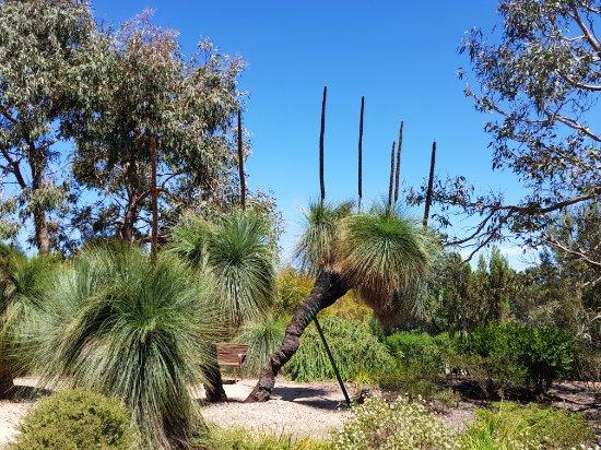 Kalorama, Australia: 20180105_120659_large.jpg