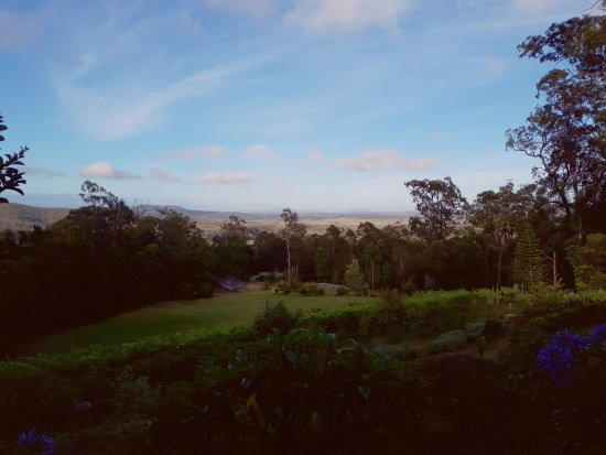 Wallaby Ridge Retreat: Hard to see, but there are a dozen or more wallabies around the grassed area