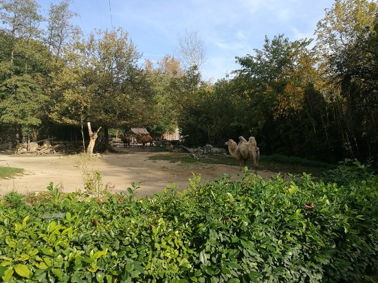 Parco Natura Viva: IMG_20171017_104856_large.jpg