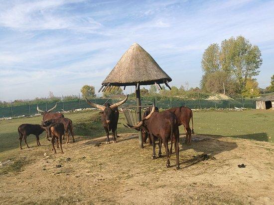 Parco Natura Viva: IMG_20171017_100826_large.jpg