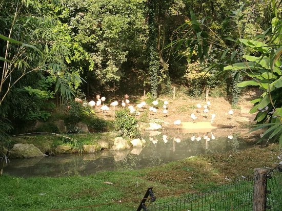 Parco Natura Viva: IMG_20171017_104454_large.jpg