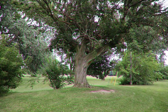 St. Catharines, Canadá: I enjoyed myself in this park