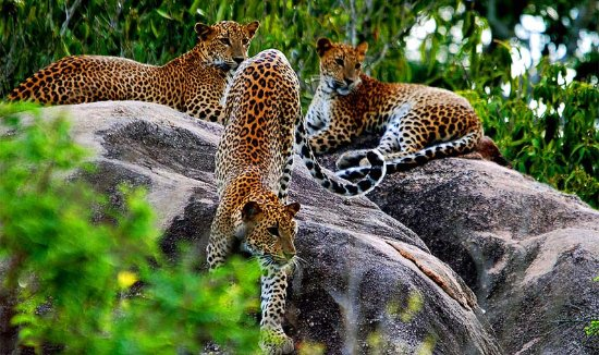 Deesha Safari Tours