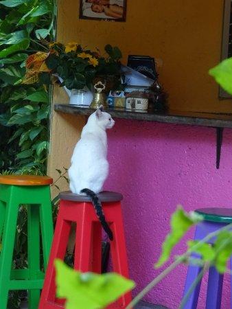 Don Diego de la Selva: The cat ordering its milk at the bar!