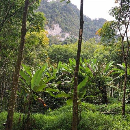 Our Jungle House: photo2.jpg