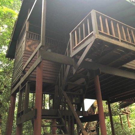 Our Jungle House: photo3.jpg