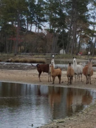 Foto de Pine Grove Campground and Waterfowl Park