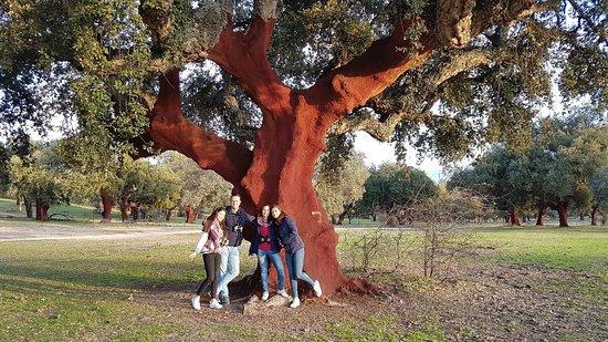 Malpartida de Plasencia, Spain: 20180104_173731_large.jpg