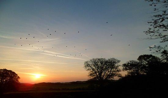 Auchencairn, UK: Barnacle geese at sunset