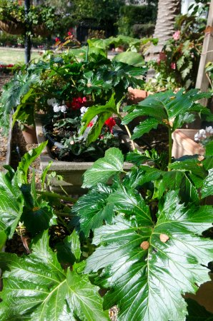 Beazley House: Beautiful plants in the garden