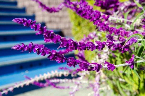 Beazley House: Plants in the entranceway
