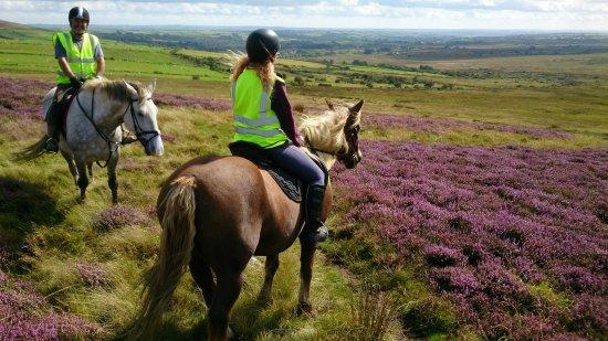 Preseli Pony Trekking