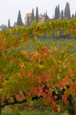 Il Borghetto di San Gimignano Agriturismo Photo