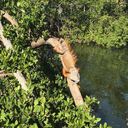 Hampton Inn Key Largo: photo2.jpg