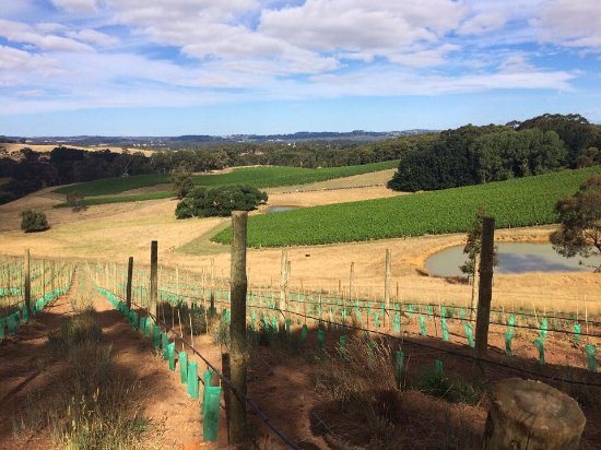 Oakbank, Australia: Our new Shiraz vineyard has some of the best views on the property.
