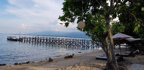 West Bali National Park, Indonesia: 20180104_170757_large.jpg