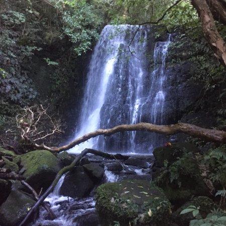 Kaka Point, Nuova Zelanda: photo1.jpg